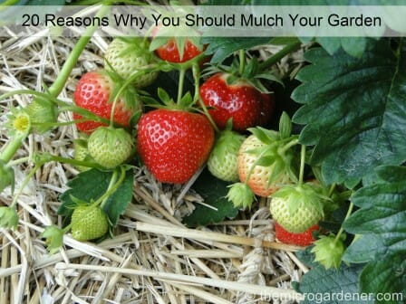 20 Reasons Why You Should Mulch Your Garden