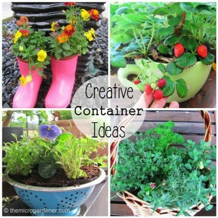 Creative container ideas - upcycled planters made from gumboots, oversized cup and saucer, colander and basket. | The Micro Gardener