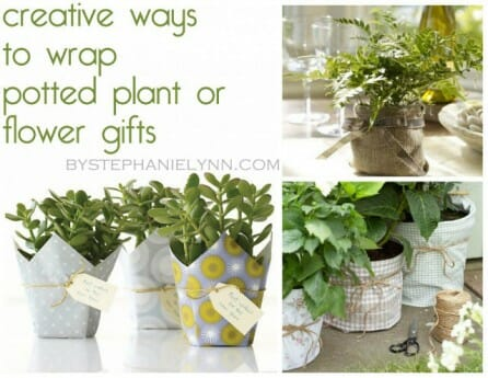 Creative ways to wrap potted plant or flower gifts | The Micro Gardener