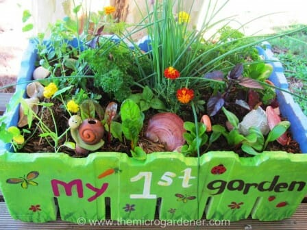 Kids Salad Garden in a Box - a gift that keeps on giving. | The Micro Gardener