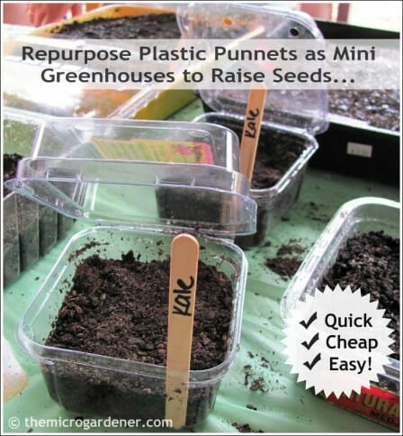 Repurpose plastic punnets as mini greenhouses to raise seeds - quick, cheap & easy!