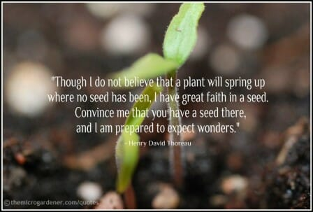"Seed Quote: ""Though I do ""not believe that a plant will spring up where no seed has been, I have great faith in a seed. Convince me that you have a seed there, and I am prepared to expect wonders.""- Henry David Thoreau"