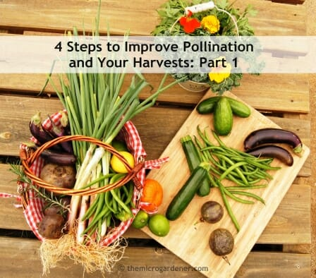 4 Steps to Improve Pollination and Your Harvests: Part 1