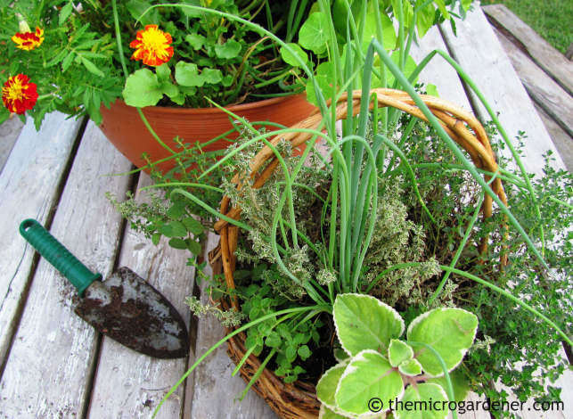 Delicious edible pots with herbs and salad ingredients from my garden