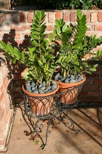 Attractive cache pots with pebble mulch
