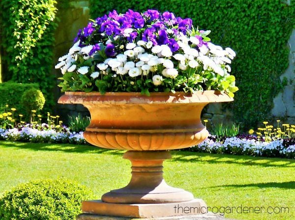 An Elegant Terracotta Planter Is Used As A Focal Point With Purple And  White Petunias.