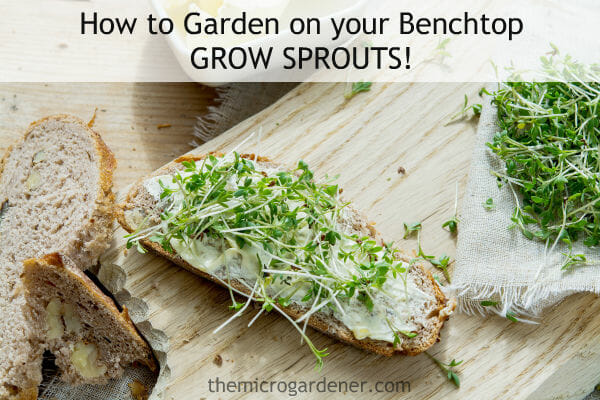 How to Garden on your Benchtop Grow Sprouts
