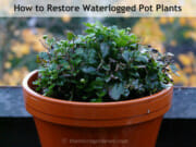 How to Restore Waterlogged Pot Plants