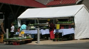 Plants for sale at markets - you avoid paying extra for middleman costs