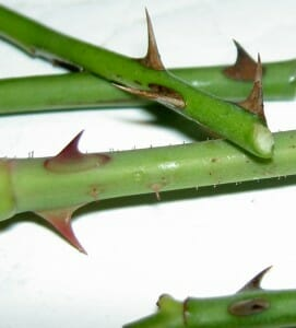 Plant cuttings are a great free source of new plants