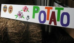 Potato sign made on corflute board with buttons and coloured contact