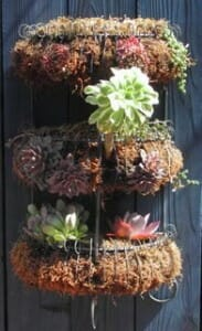 Wire spice rack planter with moss and succulents - an easy DIY project.