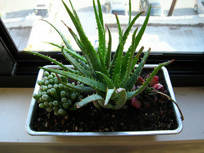 Clever Plant Container Ideas - The Micro Gardener on homemade seed pots, homemade plant markers for garden, homemade plant stands, homemade toys, homemade plant watering, homemade plant water, homemade plant trellis, homemade plant labels, homemade clay pots, homemade gardening gifts, cool house plants in pots, homemade plant stakes, homemade orchid pots, homemade plant tables, homemade herb pots, homemade plant containers, homemade plant hangers, homemade plant benches, tomato plants in pots,