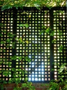 Lattice privacy and shade screen vertical garden.