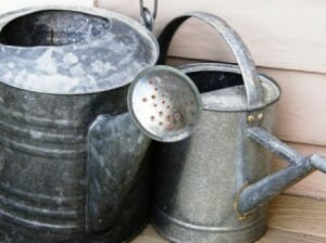 Watering cans help minimise water wastage.