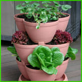 Tiered stackable pots with herbs - Available from www.stackapots.com.au | The Micro Gardener