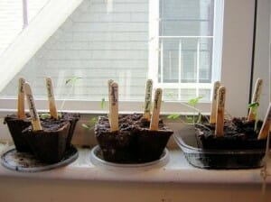 Raising seeds on a sunny windowsill is one good spot to help them germinate more quickly. Photo: Grevillea
