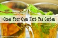 Grow your own herb tea garden - easy herbs to grow, brew and use for health