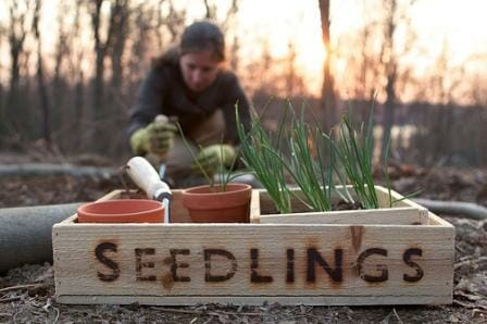 Planting at the right time will ensure success. | The Micro Gardener