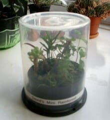 Think outside the square and reuse your CD spindle case as a terrarium planter!