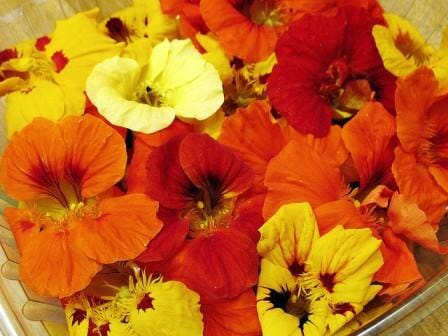 20 Uses for Nasturtiums: The edible flowers taste as good as they look!