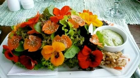 20 Uses for Nasturtiums: Nasturtium flower salad with 7 greens