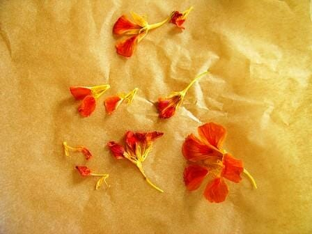 20 Uses for Nasturtiums: Press Nasturtium flowers between 2 layers of waxed paper lightly with a low iron to gently seal together & make your own decorative wrapping paper.