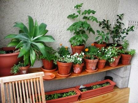 margies balcony garden the micro gardener - Garden Ideas In Small Spaces