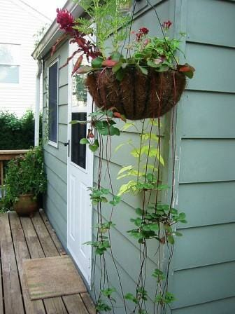 Strawberries & scented geraniums make full use of the space in this hanging basket | The Micro Gardener