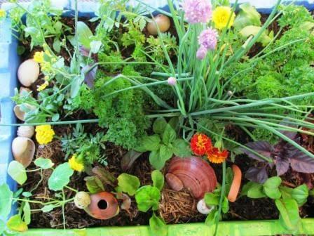 Kids edible salad, herb & flower box