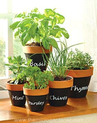 Blackboard paint pot labels | The Micro Gardener