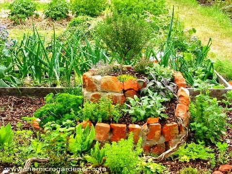 Herb spiral on a small allotment. | The Micro Gardener