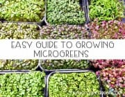Easy Guide to Growing Microgreens
