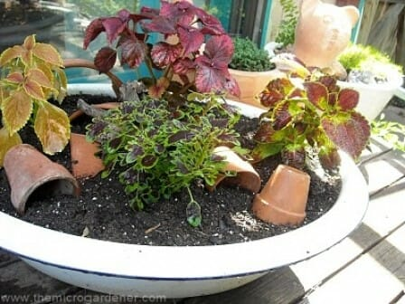 Old metal wash basin planter with terracotta pot garden art | The Micro Gardener