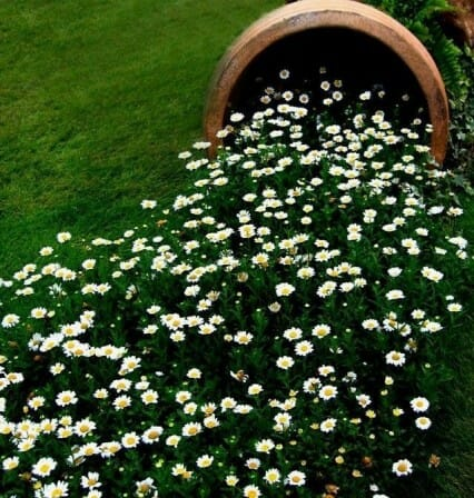 Large spill pot with a daisy carpet | The Micro Gardener