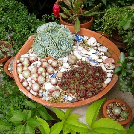 Shallow succulent planter in pot base | The Micro Gardener