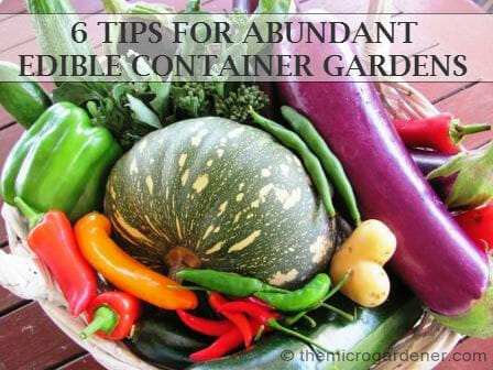 Grow an abundant harvest of home grown food in edible container gardens | The Micro Gardener