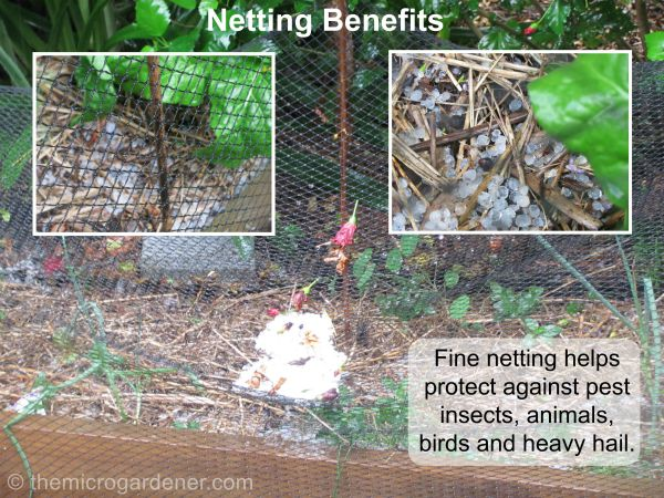 This fine netting has also been useful to protect my raised garden bed from bush turkeys. These large wild birds are extremely destructive but they won't go near it now!