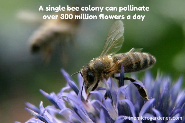 A single bee colony can pollinate over 300 million flowers a day. Improve pollination & your harvests by working with nature to plant more flowers.
