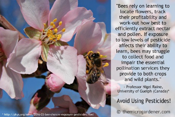Powerful reasons to avoid pesticides in our gardens