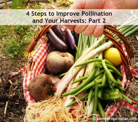4-Steps-to-Improve-Pollination-and-Your-Harvests-Part-2-wm-e1429593747707