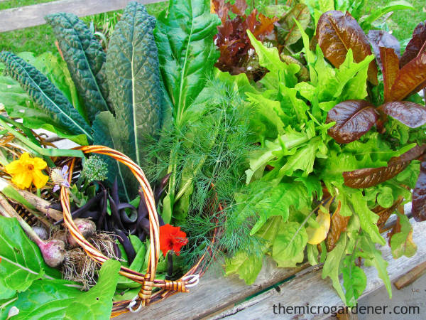 Home grown garden veggies are higher in nutrition and superior in taste than chemically-grown produce.