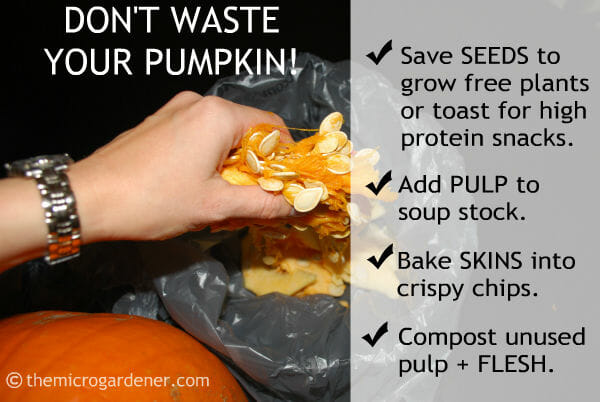 Don't Waste Your Pumpkin! Tips on Uses for Food Scraps - The Micro Gardener November 2016 Newsletter
