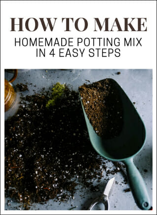CLICK FOR DETAILS: How to Make Potting Mix at Home Guide