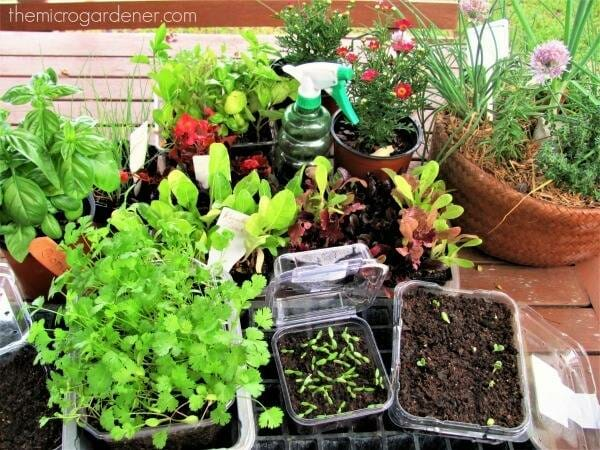I love propagating and growing new plants for free from cuttings and saved seeds