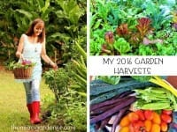 Harvests from My 2016 Garden