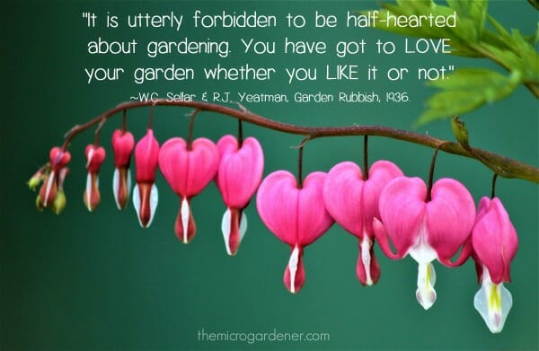 """It is utterly forbidden to be half-hearted about gardening. You have got to love your garden whether you like it or not."" Garden Quote 