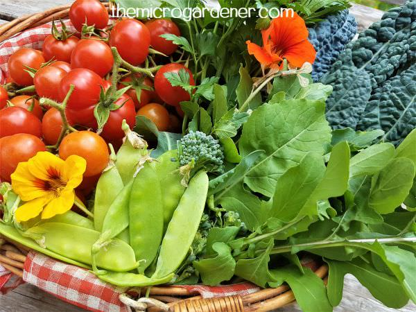 Basket of home grown food in rainbow colours