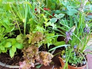 Easy Low Cost Edible Gardens for Busy People @ Conscious Life Festival @ Lake Kawana Events Centre