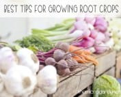Best tips for growing root crops - The Micro Gardener